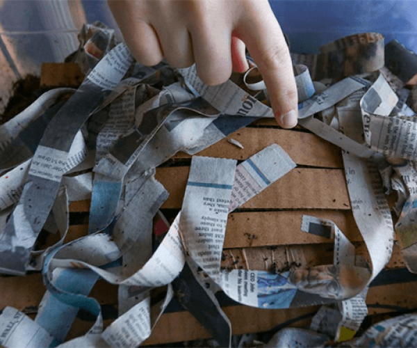 compost bin with strips of newspaper, cardboard, and worms
